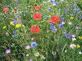 Akkerbloemen-(mengsel)