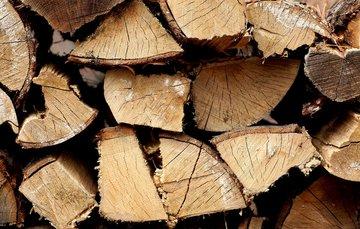 Bosbouw en houthakkers