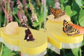 Vlinders-bijen-en-insecten