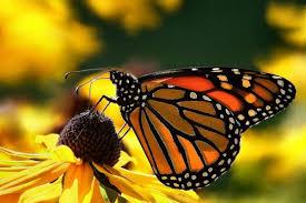 Educatieve vlinderkast