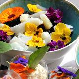 eetbare bloemen zelf kweken met deze complete kweekset