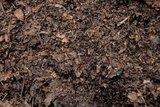 Bladcompost goede voedingsbodem voor groente en moestuin