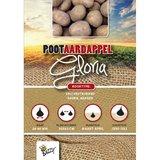 Pootaardappel Gloria - online bestellen - te koop bij tuinspul.nl