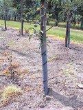 Boombescherming spiraal - tuinspul
