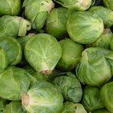 Groninger Spruitkool | Biologische zaden
