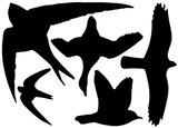 Raamstickers / vogelstickers zwart_
