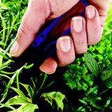 Bloemenschaartje Herbies  _