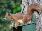 eekhoorn voederhuisje