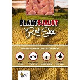 Plantsjalotten Red Sun - 250 gram