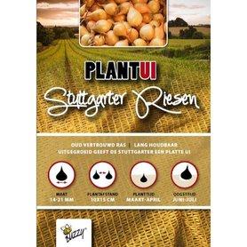 Plantuien Stuttgarter Riesen - 500 gram