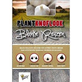 Plantknoflook Blanke Reuzen 5 stuks