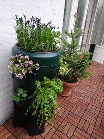 Wormencompost ton met verticale tuin