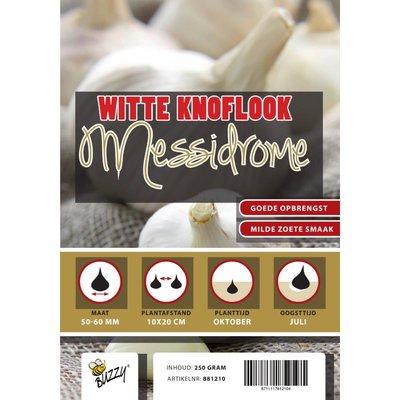 Winter Knoflook Messidrome 5 stuks