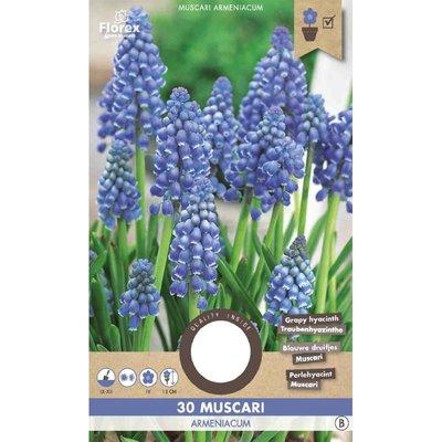 Muscari Armeniacum 8/9 30st (blauwe druifjes)