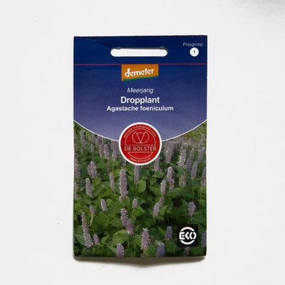 Dropplant - agastache foeniculum