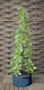 Patio planters voor klimmers (2 stuks)